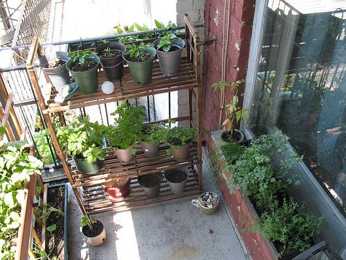 Herb Balcony Garden